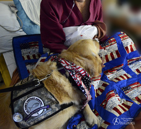 Phoebe Comfort Dog delivering a handmade patrotic quilt to a Veteran.