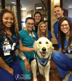 Hospital nurses taking a stress break with Pax Comfort Dog.