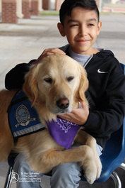 A young boy meeting Phoebe Comfort Dog at a Crisis Shelter after a tornado.